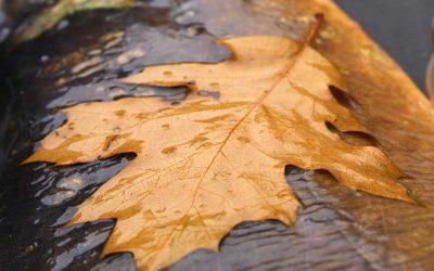 Karpervissen in de herfst: 5 tips!
